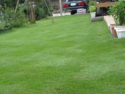 南側芝刈り後.jpg
