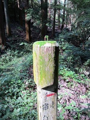 道標上に杉が発芽.jpg
