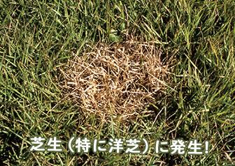 sec01_photo_1001.jpg