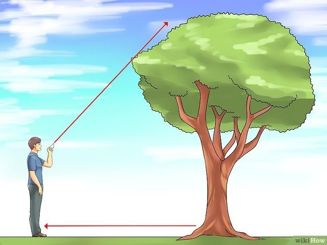 v4-760px-Measure-the-Height-of-a-Tree-Step-4-Version-2.jpg